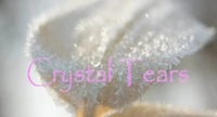 Crystal20Tears_2